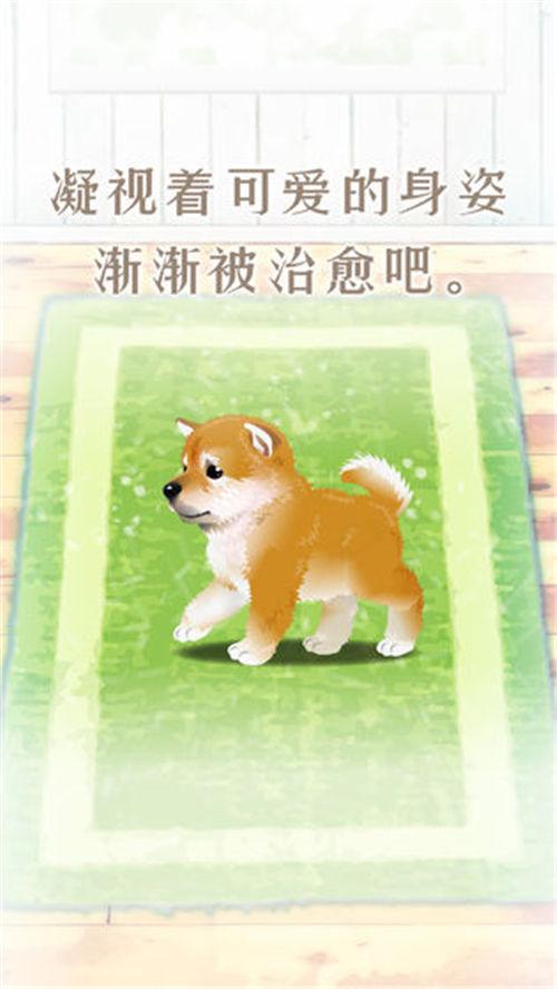 养育柴犬的治愈游戏下载