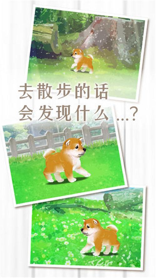 养育柴犬的治愈游戏安卓版