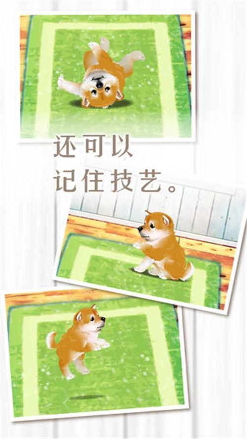 养育柴犬的治愈游戏安卓