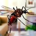 超级蚊子乱斗手机中文版