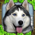流浪狗生存模拟器中文版